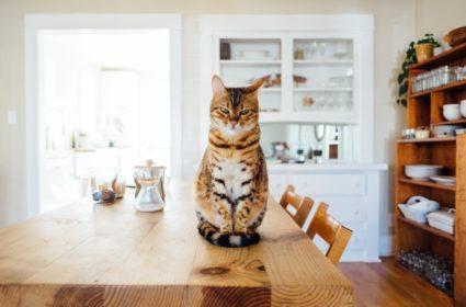 Hrana uscata pentru pisici – cum o alegem?